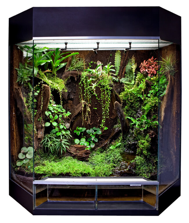 terrarium with nz tree fern fibre panels