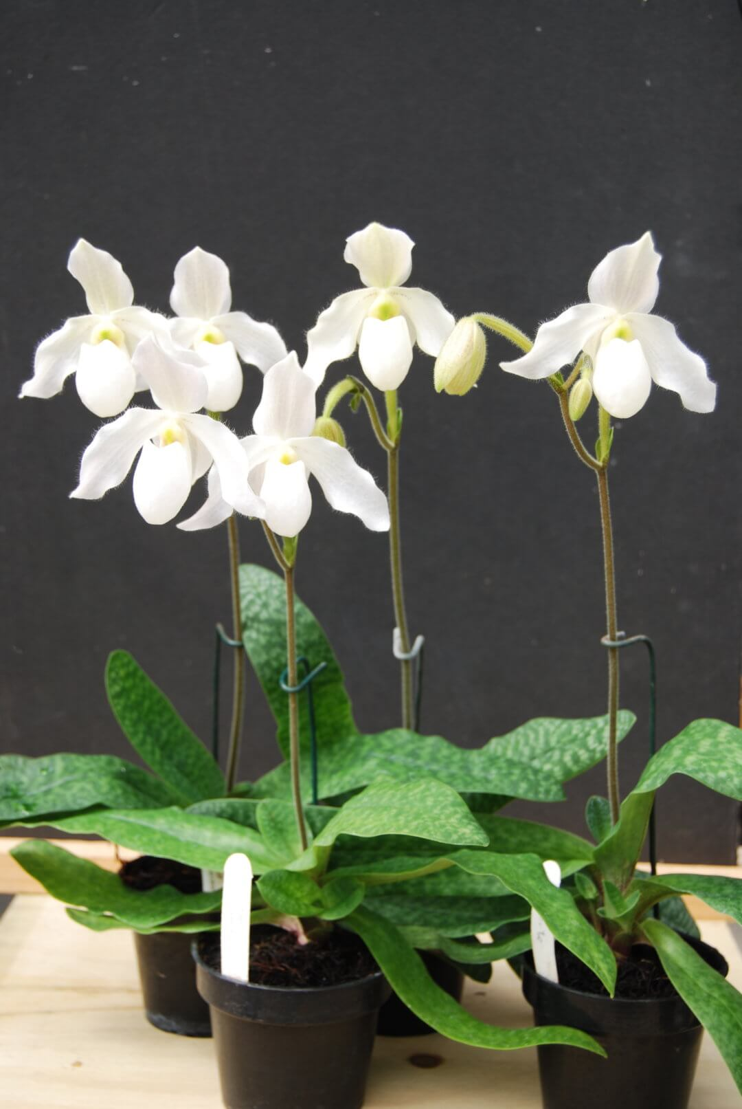 Perfect Conditions for Thriving Orchids